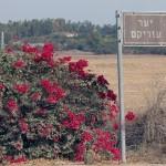 דרכי הגישה ליער עזריקם מכיוון באר טוביה - צילום: אפי אליאן