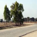 הדרך הישנה המובילה אל יער עזריקם - כביש 3703 - צילום: אפי אליאן