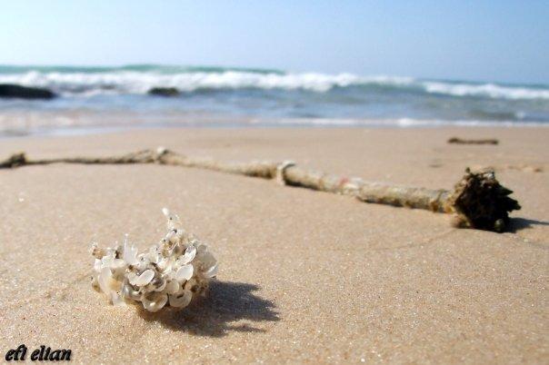 נשטף אל החוף - חוף ניצנים - צילום: אפי אליאן