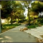שביל סלול בתוככי הגן מהוואל לורדים בירושלים - צילום: אפי אליאן