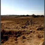 עשביה העוטפת את שטח הגבעה של תל איסדוד