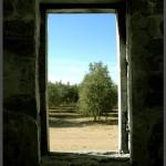 מבט לפרדס המערבי למבנה החאן בתל איסדוד