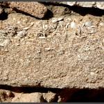 לבני הבניה העשויים חול כורכר וחלקי צדפים