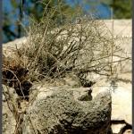 מרזב ישן שנבנה מלבני צדפים וכורכר