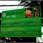 מידע אודות צמחי מים