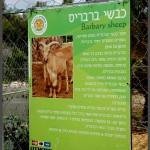 מידע אודות כבשי ברברים