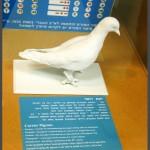 מודל יונת דואר איתה ביצעו שימוש להעברת הודעות