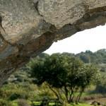 קשת ועץ שקמה בשמורת הטבע נחל אלכסנדר