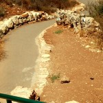 השביל המוריד אל דרכי הטיול בשמורה