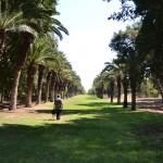 """שדרת העצים בכניסה לגן הבוטני של בי""""ס מקוה ישראל"""