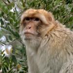 הקוף החושב בפארק הקופים יער בן שמן
