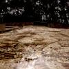 החדר המערבי בפסיפס הציפורים בקיסריה - צילום: אפי אליאן