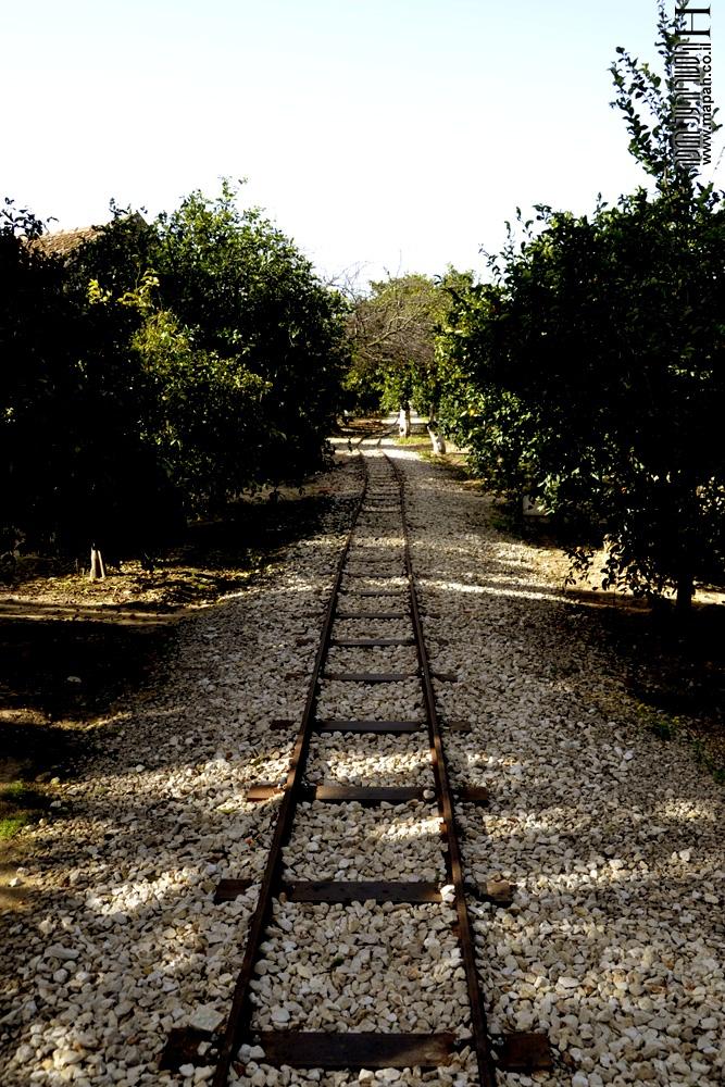 מסילת הטרזינה בפרדס מינקוב - צילום: אפי אליאן