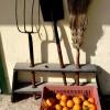 כלי עבודה ליד הארווה בפרדס מינקוב