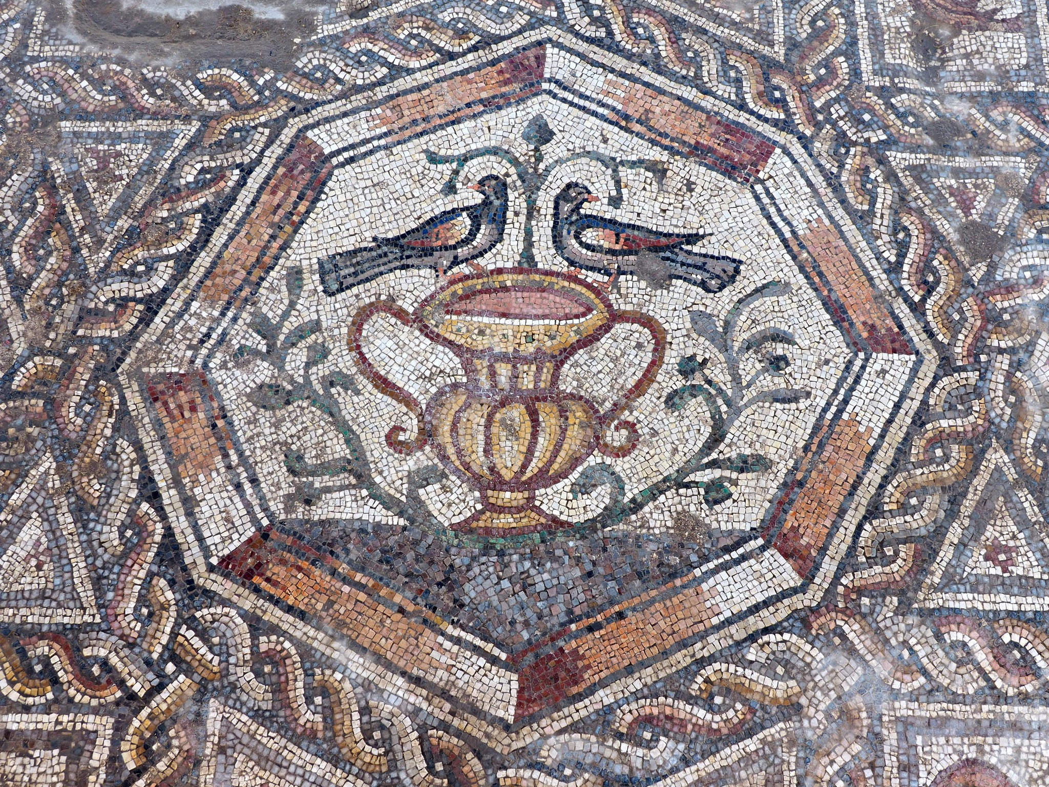 חלקים מהפסיפס המרשים שנחשף בלוד - צילום: אסף פרץ