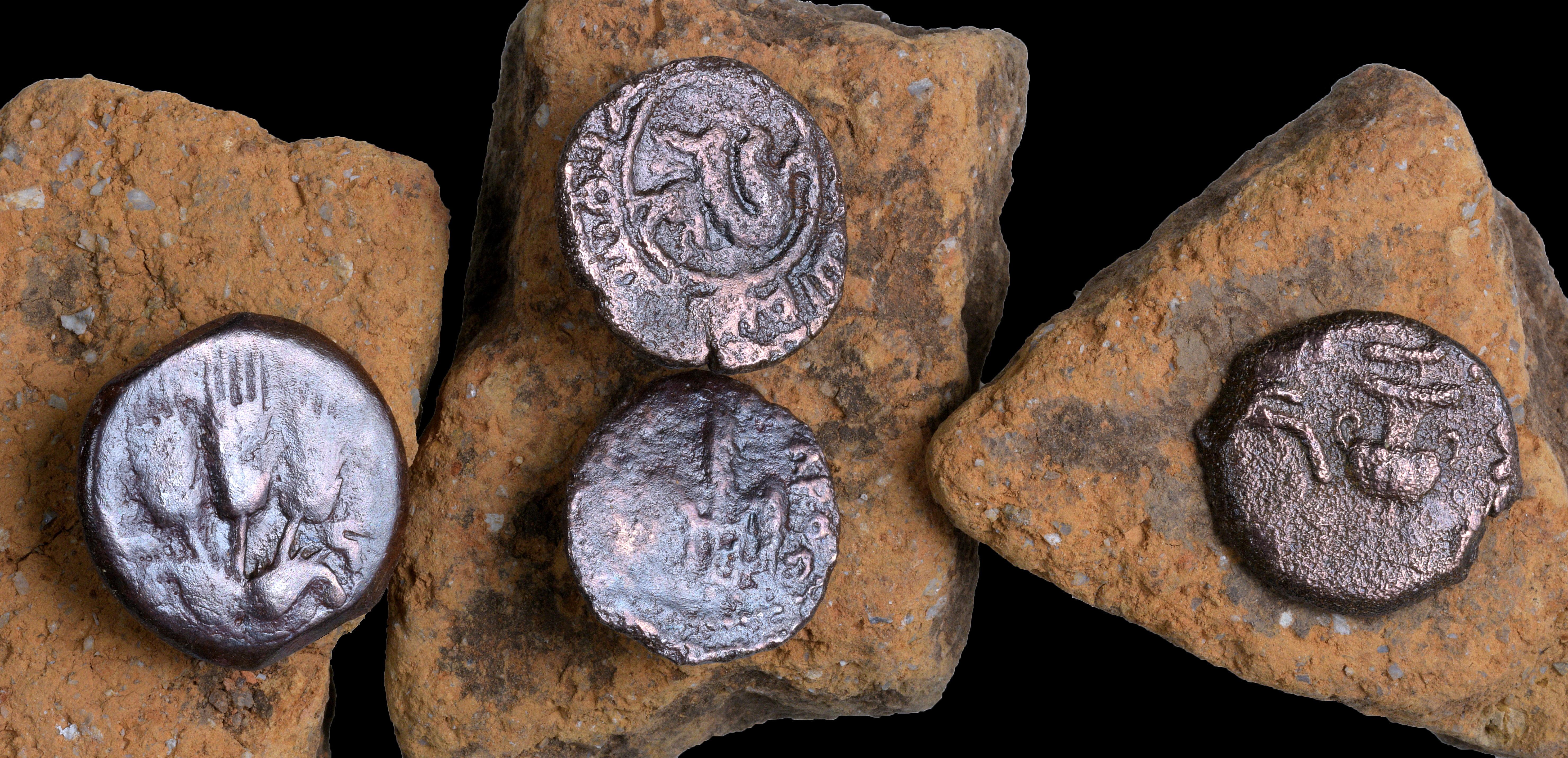 המטבעות העתיקים שנחשפו בחפירה. צילום: קלרה עמית