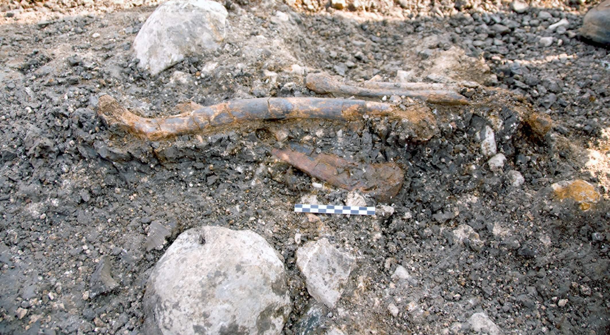 עצמות ניאנדרטל בשטח – עין קשיש. צילום: אראלה חוברס, האוניברסיטה העברית בירושלים