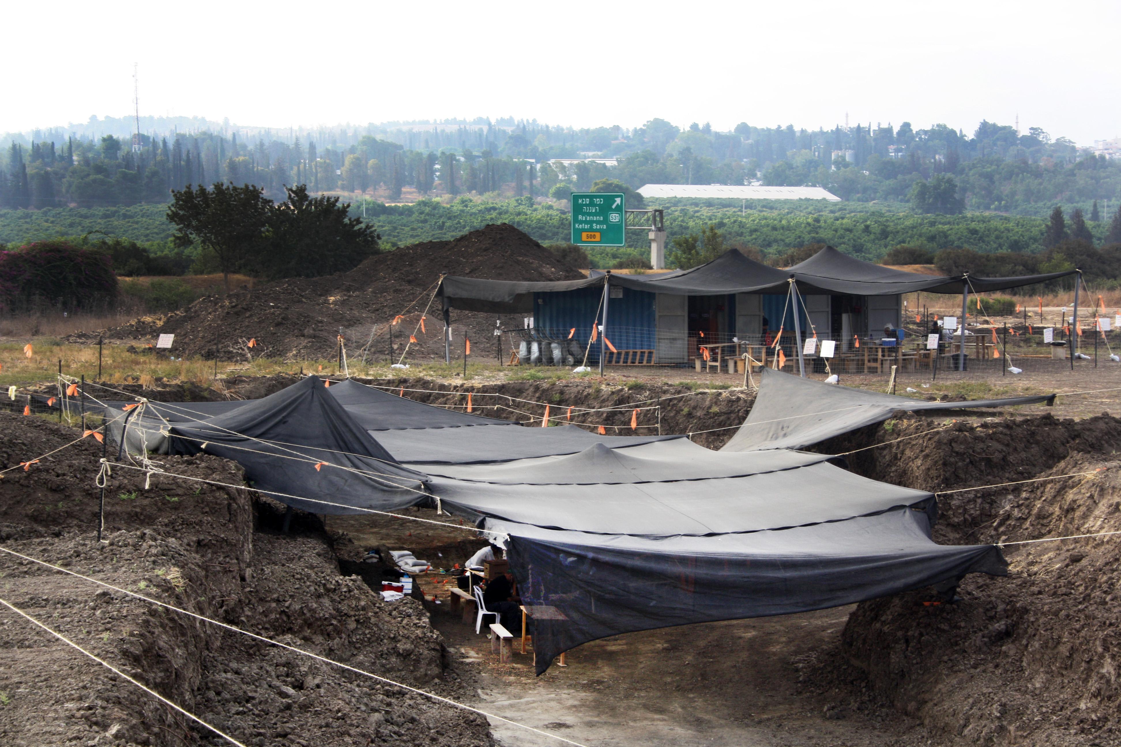 העבודה באתר החפירות בג'לג'וליה. צילום: שמואל מגל