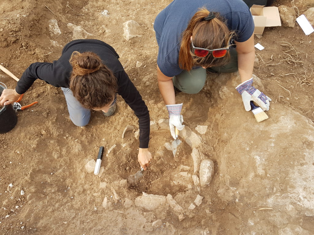 החפירה בגלאון בהשתתפות עשרות בני נוער ומתנדבים.צילום סער גנור