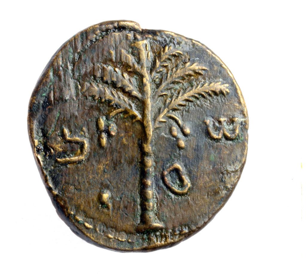 מטבע שעליו דוגמת עץ תמר ושמו של שמעון צילום קלרה עמית