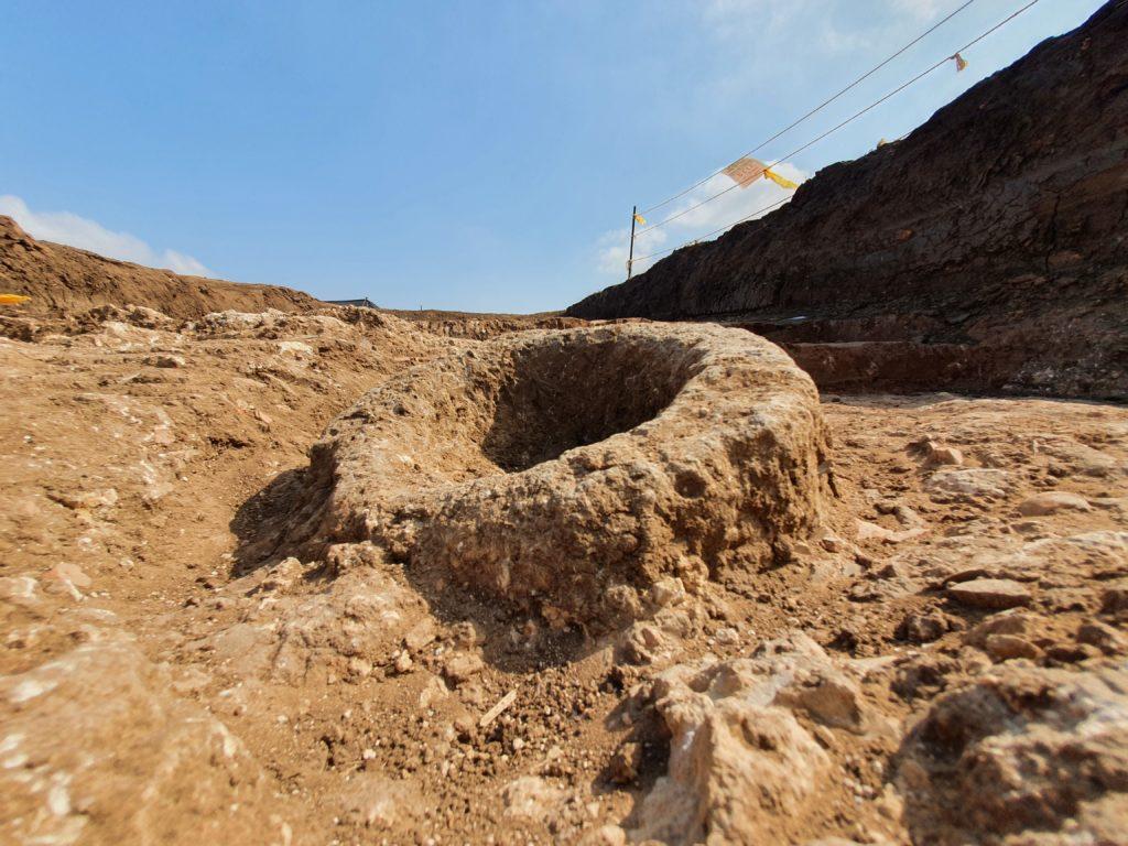 אבן ריחיים לטחינת חיטה שנחשפה באתר. צילום-יולי שוורץ