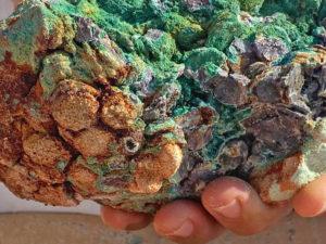 המטבעות העתיקים מחוף הבונים - צילום: אופיר חייט